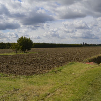 Fig. 2. The peculiar aspect of the Bassa Romagna landscape: ploughed lands between orchards and vineyards (picture by the author).