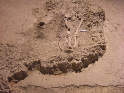 Urban Archaeology Project in Senigallia: from Anthropological to Archaeological Analysis. A short presentation